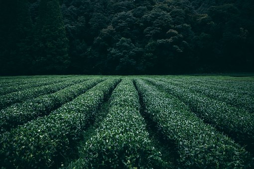 селскостопански инвентар