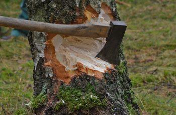 дървосекач